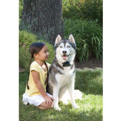 PetSafe Sistem de împrejmuire pentru câini mari > 3,6 kg, 6091